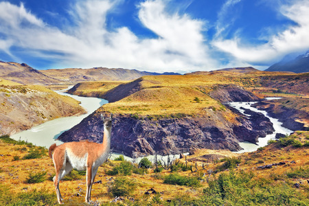 dreamland: Dreamland Patagonia. Cascading waterfalls river Paine. On the hill there is adorable little camel -llama Stock Photo