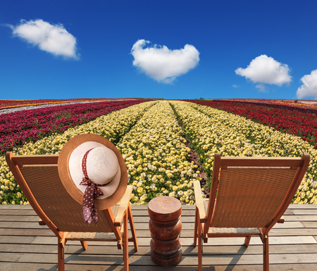 lounges: Two chaise lounges for rest stand on scaffold at a picturesque flower field. On one chaise lounge the elegant straw hat hangs. Spring buttercups grow multi-colored strips