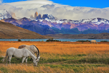 azul: Lake Laguna Azul in the mountains. On the shore of Lake grazing horses. Impressive landscape in the national park Torres del Paine, Chile Stock Photo