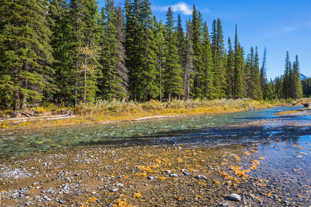 pine creek: Pine forest in  Rocky Mountains. Beneaped creek autumn in Banff National Park. Canada