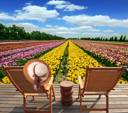 kibbutz: The huge field of flowers in the kibbutz on border with Gaza Strip. Two convenient chaise lounges stand on a roadside on wooden scaffold. The elegant womens hat hangs on one of them