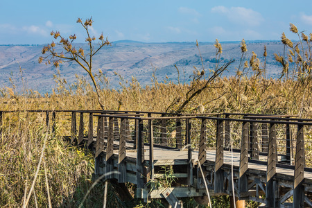 wintering: The narrow bridge to go among the grass. Hula Nature Reserve, Israel, December. Lake Hula is a wintering place for migratory birds