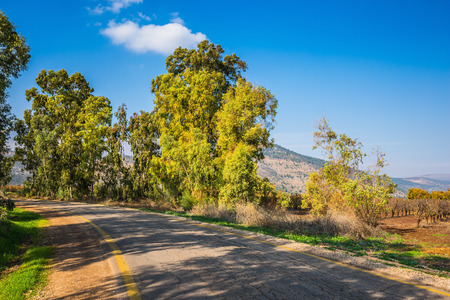 galilee: The reserve of migratory birds Hula in the Upper Galilee. The picturesque park surrounds Lake Hula