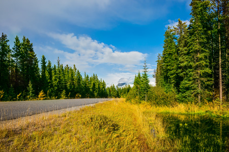rockies: The highway passes among mountains and the turned yellow woods. Canadian Rockies in fine autumn day Stock Photo
