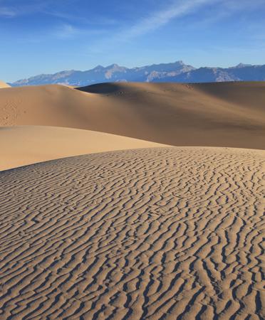 animales del desierto: Cresta de la duna. Temprano en la ma�ana en el desierto. sombras repentinas, ondulaciones sutiles en la arena y las huellas de los animales noche del desierto