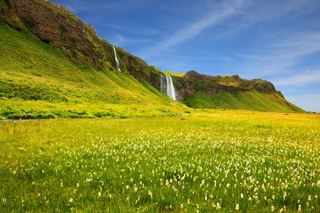 day flowering: Seljalandsfoss waterfall and picturesque flowering fields and streams. Iceland in July. Warm summer day