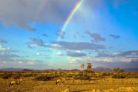 Oryx in Namibia. Magnificent rainbow, autumn turned yellow bush and mountains in the distance Stock Photo
