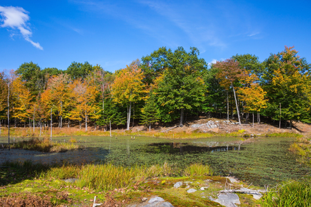 zoological: Little lake overgrown with water plants. Warm autumn at the zoological park in Canada Stock Photo