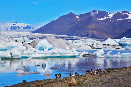J�kuls�rl�n Glacial Lagoon in Iceland. Drifting ice floes and flying geese are reflected in an ocean lagoon Stock Photo