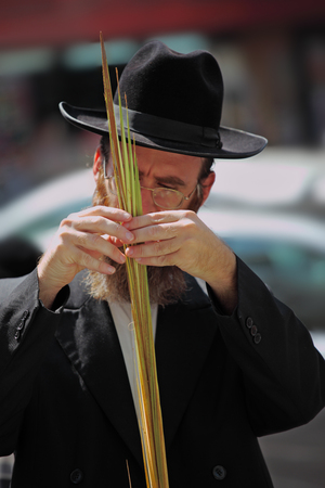 BNEI-BRAK, ISRAEL - SEPTEMBER 22: The religious Jews in a hat are choosing ritual plants lulav at the market on the eve of Sukkot September 22, 2010 in Bnei Brak, Israel. This was Sukkoth market