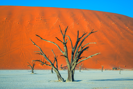 sossusvlei: Ecotourism in Namib-Naukluft National Park, Namibia. Dried lake Deadvlei, with dry trees. Evening, sunset Stock Photo