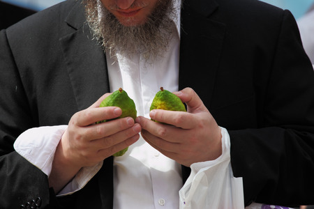 sukkah: Religious Jew chooses ritual plant - citron- on the pre bazaar on the eve of Sukkoth. September 22, 2010, Sukkoth market, Bene Brak, Israel Editorial