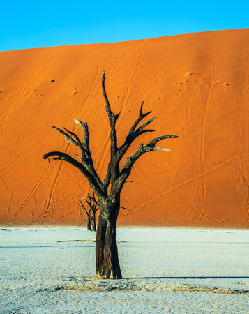 ecotourism: Orange dune. The bottom of dried lake Deadvlei, with dry trees. Ecotourism in Namib-Naukluft National Park, Namibia