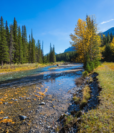 pine creek: Beneaped creek autumn in Banff National Park. Pine forest in  Rocky Mountains. Canada