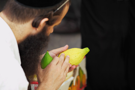 sukkoth festival: Religious Jew chooses ritual plant - citron- on the bazaar on the eve of Sukkoth. September 22, 2010, Sukkoth market, Bene Brak, Israel
