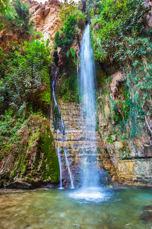 Falls Shulamit falls into pond with emerald water. Ein Gedi - Nature Reserve and National Park, Israel 版權商用圖片