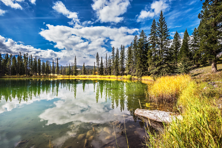 The small superficial lake is surrounded with a coniferous forest. The smooth surface of water reflects the cloudy sky. Autumn day in Jasper National Park in the Rocky Mountains in Canada