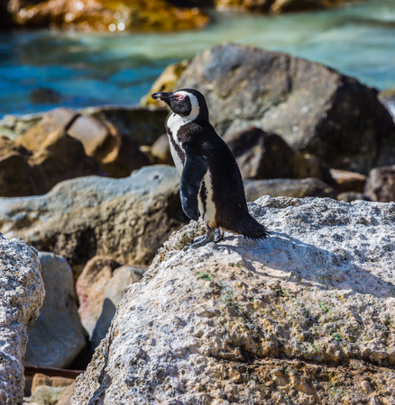 penguins on beach: Boulders Penguin Colony. Huge boulders and black-white penguin on the beach of Atlantic Ocean. The concept of ecotourism Stock Photo