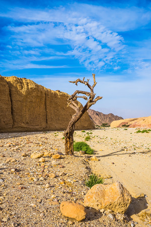 eilat: Stone desert near the seaside resort of Eilat. The route starts in the scenic Black Canyon. Fancifully curved dried tree