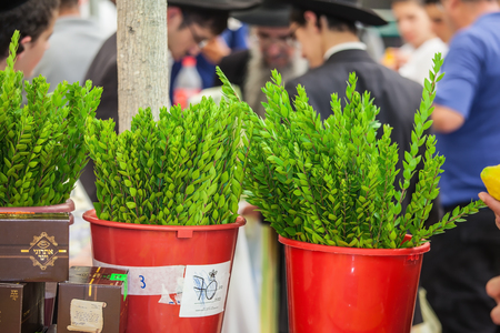 Traditional market before the holiday of Sukkot in Jerusalem. Armful ritual myrtle - Adas stand in a bucket of water