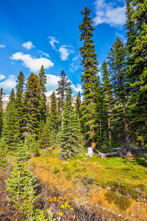 swampy: The swampy valley. Autumn in the Rocky Mountains of Canada. The concept of active tourism and eco-tourism Stock Photo