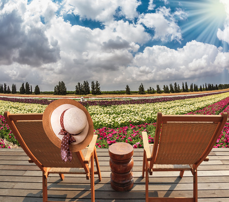 Flower kibbutz near Gaza Strip. Spring flowering buttercups. Two chaise-longue and table standing on wooden platform Stock Photo