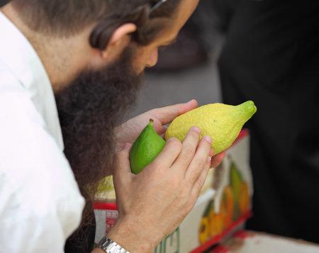 brak: Bnei Brak - September 22: An orthodox Jew in black hat picks citrus before the holiday of Sukkot September 22, 2010 in Bnei Brak, Israel