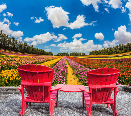 ecotourism: The concept of eco-tourism. Rustic vacation. Convenient, comfortable red chairs on a flower meadow Stock Photo