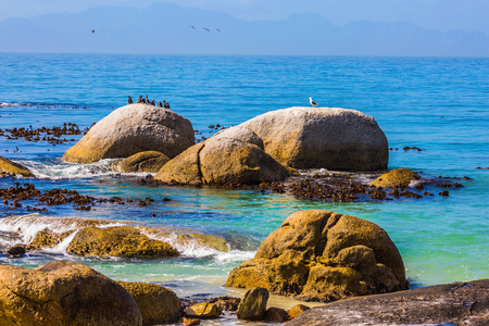 penguins on beach: The concept of ecotourism. Large boulders on the beach of the Atlantic Ocean. Boulders Penguin Colony in the Table Mountain National Park, South Africa