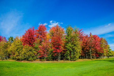 allocated: Indian summer in the French Canada. Warm sunny day in suburbs of Montreal. Multi-color trees are beautifully allocated against the background of the blue sky. Concept of eco - tourism