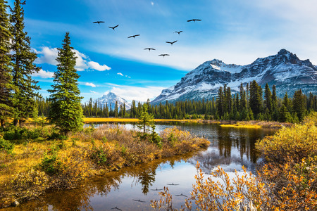 Flock of birds is reflected in the smooth water of the lake. Rocky Mountains on a sunny autumn day. The concept of active tourism