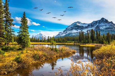 La bandada de pájaros se refleja en las aguas tranquilas del lago. Rocky Mountains en un soleado día de otoño. El concepto de turismo activo