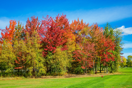 allocated: Indian summer in the French Canada.  Multi-color trees are beautifully allocated against the background of the blue sky