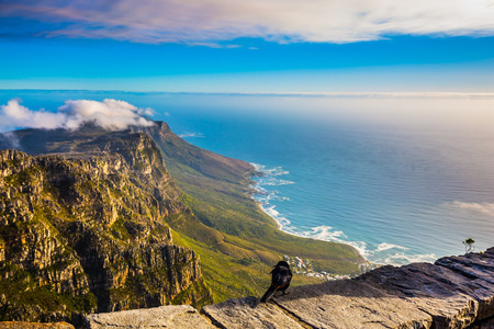 table mountain national park: National Park Table Mountain, Cape Town. View of the Atlantic Ocean into the sunset. On the stone large crow sitting