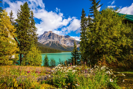 Blossoming glade in the forest on Emerald Lake. Solar cool morning in Rocky Mountains. Yoho National Park, Canada