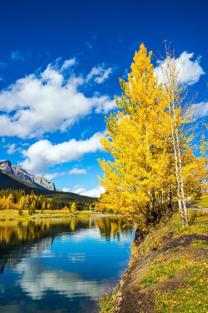 yellowing: The concept of hiking. The path and yellowing aspens surround the lake. Canmore, near Banff National Park