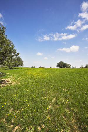 midday: Desert in blossom-time. Midday on blossoming hills of hot coast of Mediterranean sea - a grass, flowers and trees