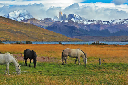 Impressive landscape in the national park Torres del Paine, Chile. Lake in the mountains. On the shore of Patagonian grazing horses Stock Photo
