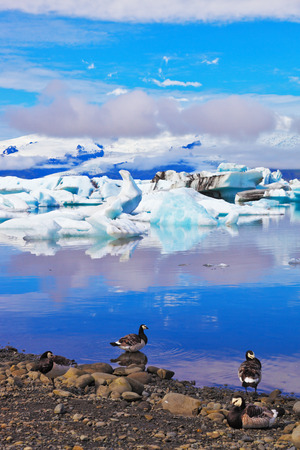J�kuls�rl�n Glacial Lagoon in Iceland. Floes floating in the ocean, and polar birds on the shore of the ocean lagoon