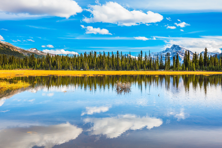 Shallow marshy lake in the Rocky Mountains. Autumn in Canada.  The concept of ecotourism
