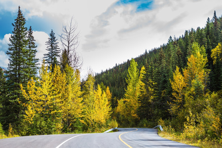 indian summer: The road in magnificent Rocky Mountains. The warm Indian summer in October. Dense evergreen and deciduous forests. The concept of active tourism