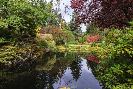 Jardins Butchart floraux fantastiques sur l'île de Vancouver, Canada. Étang calme, envahi par les lys, parmi les saules pleureurs Banque d'images