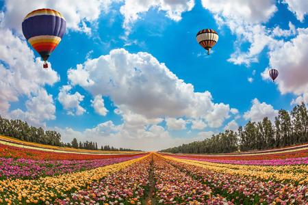 Enorm gebied van bloeiende tuin boterbloemen. Boven de bloemen vliegen grote heldere ballonnen. Het concept van de zomervakantie