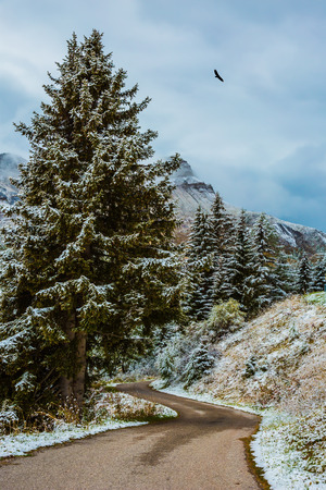 come in: Wet road in the mountains among the snow-covered firs and pines. Winter has come. First snow. New Years is soon Stock Photo
