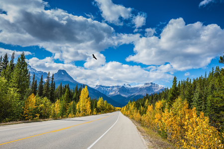 icefield: Great Banff. Excellent highway and surrounded by autumnal woods. Travel to the Bow River Canyon in September.  Canadian Rockies, Banff National Park in the autumn