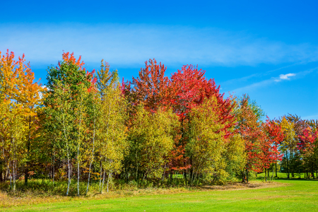 The concept of active tourism. Multi-colored crowns of the trees stand out beautifully against the blue sky. Golden autumn in French Canada