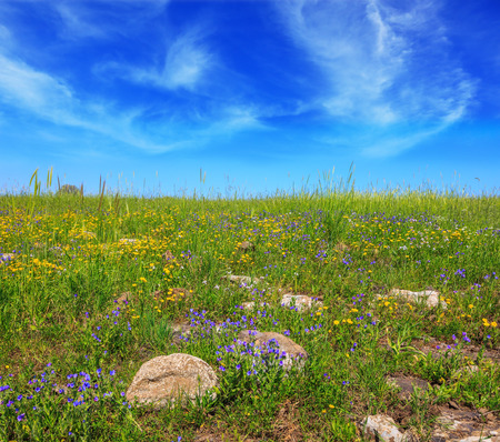 legendary: Picturesque carpet of spring flowers and fresh grass. Israel. The legendary Golan heights in a fine sunny day