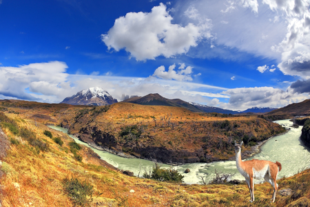 Dreamland Patagonia. Cascading waterfalls river Paine. On the hill there is an adorable little camel - llama.
