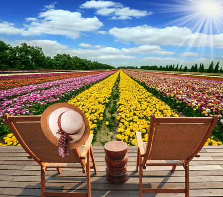 Flower kibbutz near Gaza Strip. Spring flowering buttercups. The suns rays shine from clouds. Two chairs and table standing on wooden platform Stock Photo