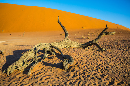 beautiful location: The bottom of dried lake Deadvlei, with dry trees. Ecotourism in Namib-Naukluft National Park, Namibia. Evening